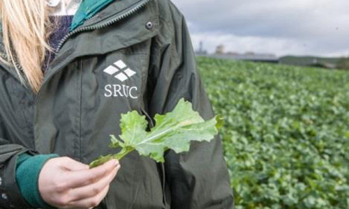 women in crop field representing SRUC