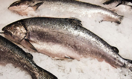 Salmon on crushed ice - image credit UoE, BBSRC